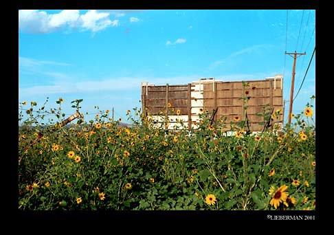 NM Gallup Billboard yellow flowers 72